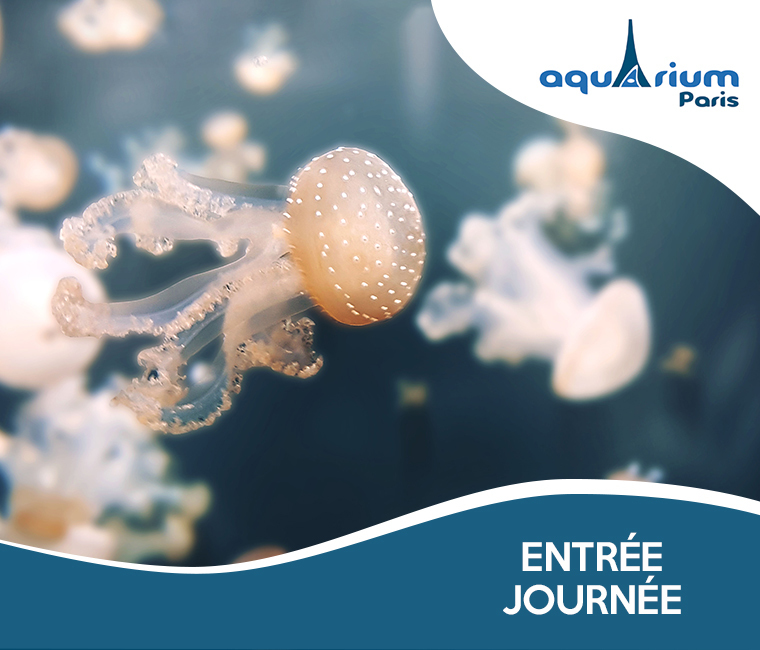 22% de réduction sur l'entrée à l'Aquarium de Paris