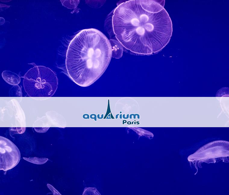 46% de réduction sur l'entrée à l'Aquarium de Paris
